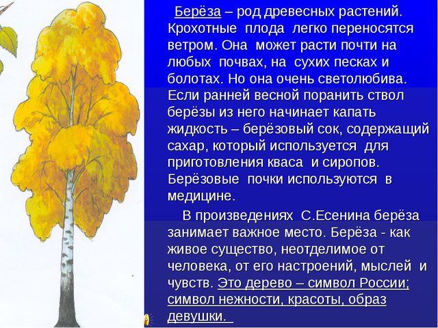 Берёза – род древесных растений. Крохотные плода легко переносятся ветром. О...