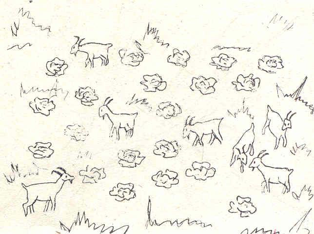 козы и капуста