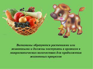 Витамины образуются растениями или животными и должны поступать в организм в