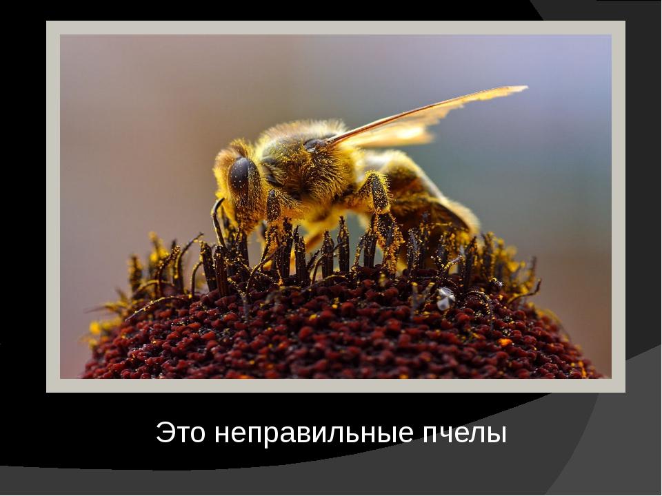 Это неправильные пчелы