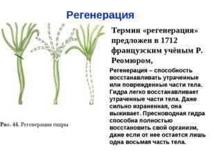 Регенерация Термин «регенерация» предложен в 1712 французским учёным Р. Реомю
