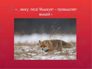 «…вижу: лиса! Мышкует – промышляет мышей.»