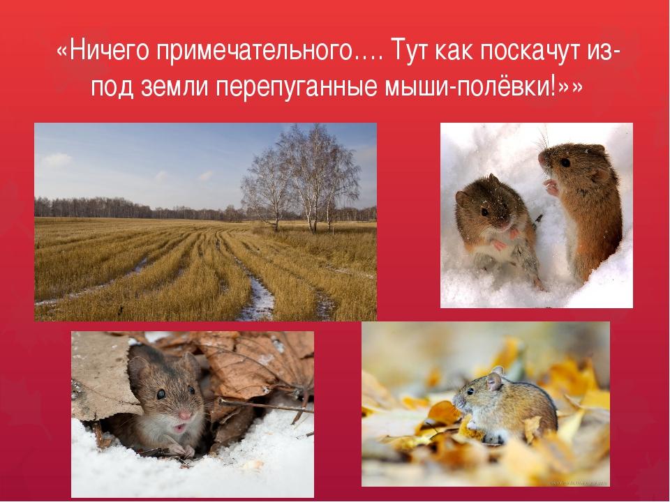 «Ничего примечательного…. Тут как поскачут из-под земли перепуганные мыши-пол...