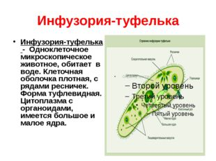 Инфузория-туфелька Инфузория-туфелька - Одноклеточное микроскопическое животн