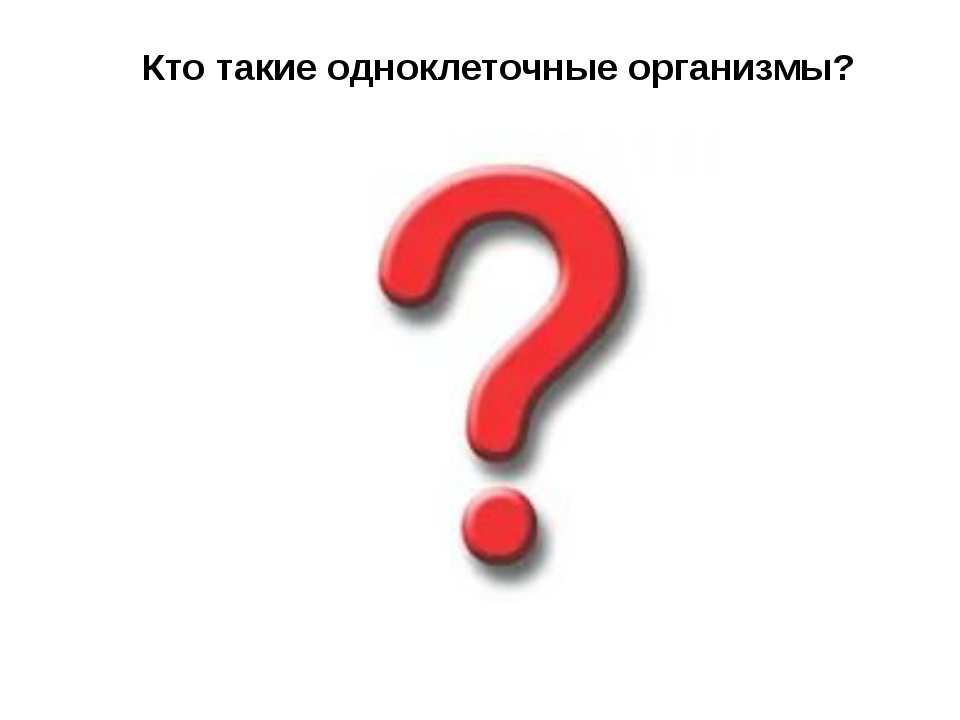 Кто такие одноклеточные организмы?