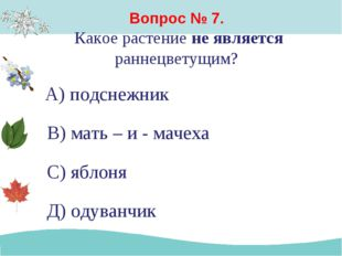 Вопрос № 7. Какое растение не является раннецветущим? А) подснежник В) мать –