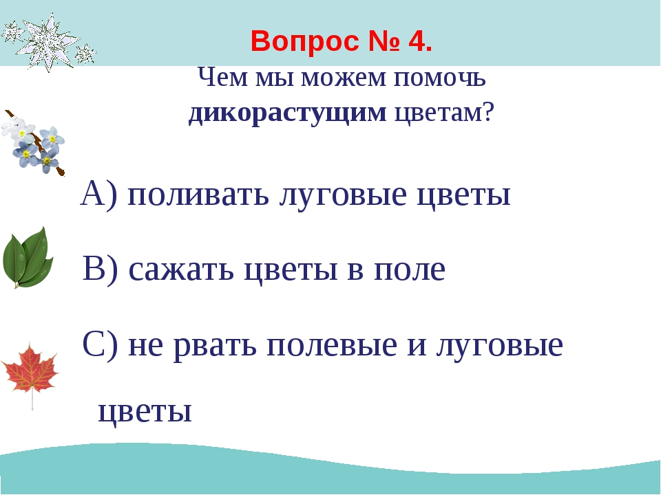 Вопрос № 4. Чем мы можем помочь дикорастущим цветам? А) поливать луговые цвет...