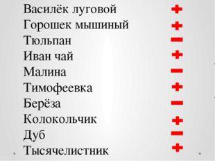 Василёк луговой Горошек мышиный Тюльпан Иван чай Малина Тимофеевка Берёза Кол