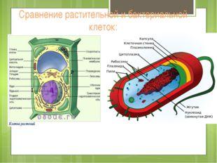 Сравнение растительной и бактериальной клеток: