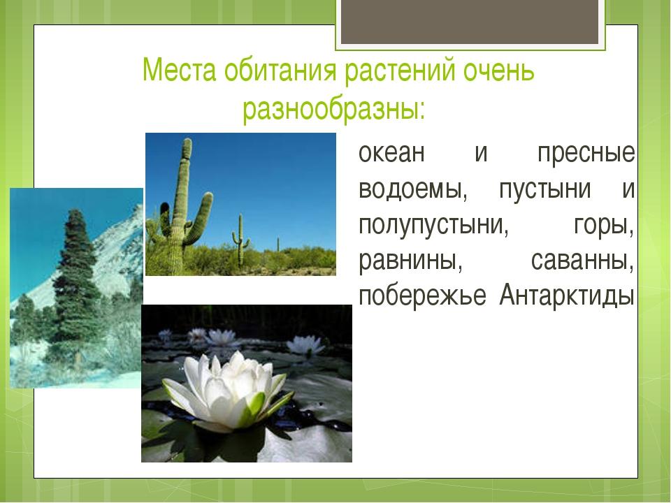 Места обитания растений очень разнообразны: океан и пресные водоемы, пустыни...