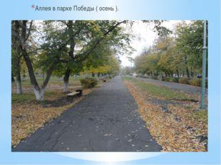 Аллея в парке Победы ( осень ).