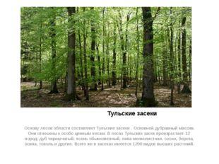 Тульские засеки Основу лесов области составляют Тульские засеки . Основной д