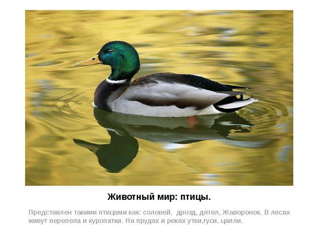 Животный мир: птицы. Представлен такими птицами как: соловей, дрозд, дятел, Ж...