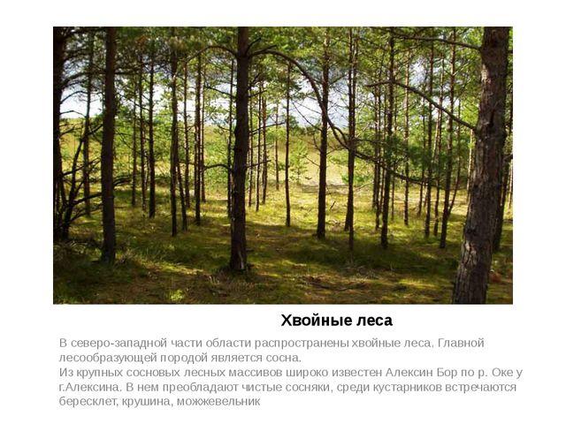 Хвойные леса В северо-западной части области распространены хвойные леса. Гл...