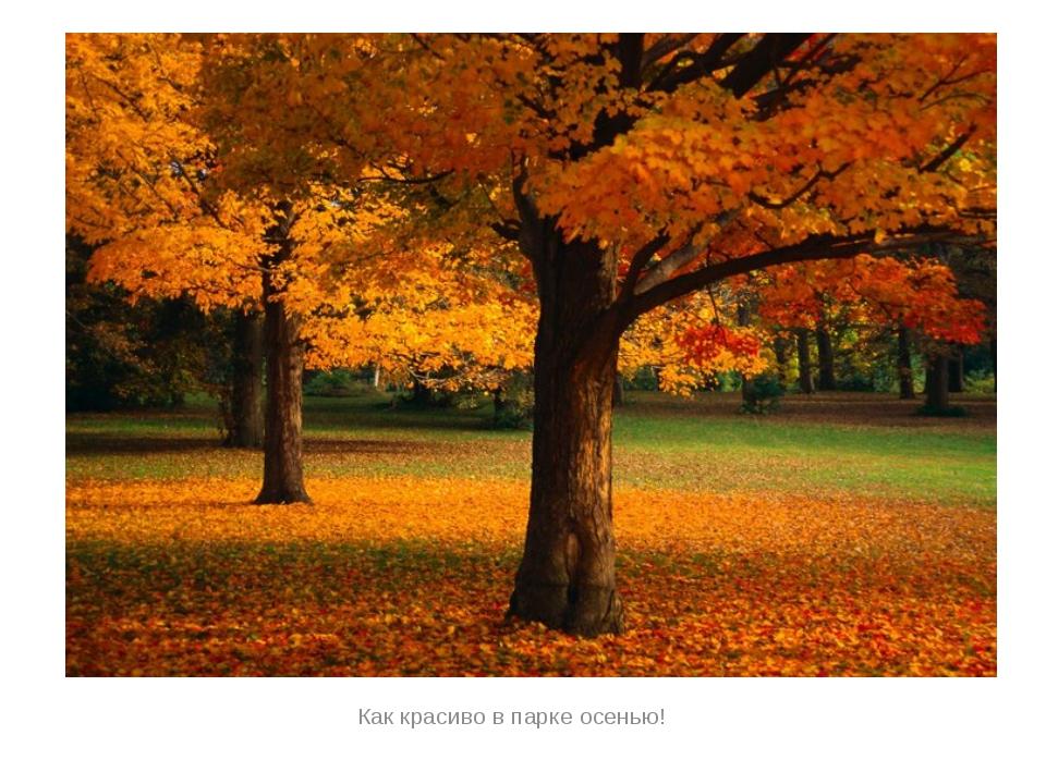 Как красиво в парке осенью!
