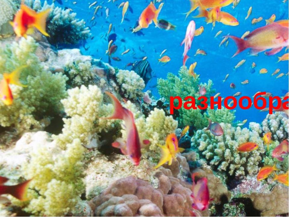 Очень богат и разнообразен подводный мир.