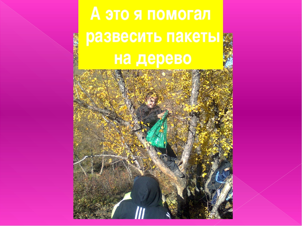 А это я помогал развесить пакеты на дерево