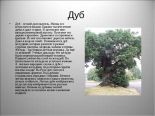 Дуб Дуб - лесной долгожитель. Жизнь его исчисляется веками. Бывают тысячелетн