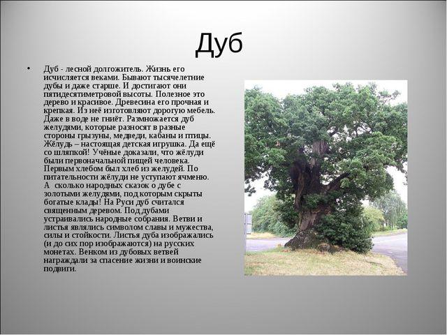 Дуб Дуб - лесной долгожитель. Жизнь его исчисляется веками. Бывают тысячелетн...