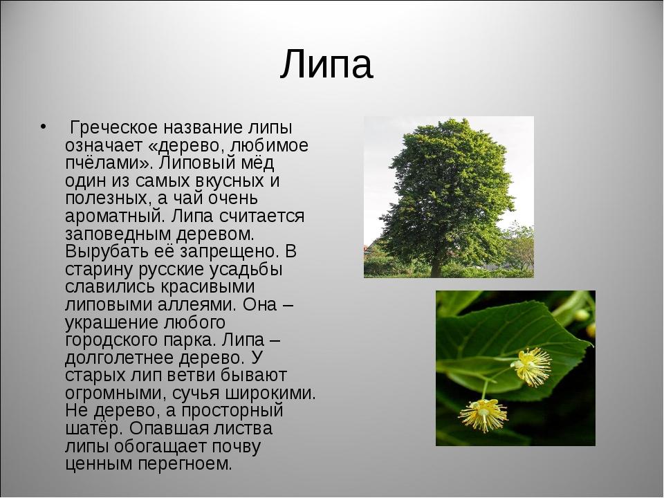 Липа Греческое название липы означает «дерево, любимое пчёлами». Липовый мёд...