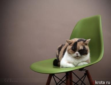 Кошки любят дизайнерскую мебель * НОВОСТИ В ФОТОГРАФИЯХ
