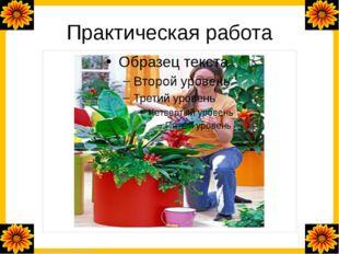 Практическая работа FokinaLida.75@mail.ru