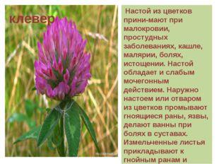 Настой из цветков прини-мают при малокровии, простудных заболеваниях, кашле,