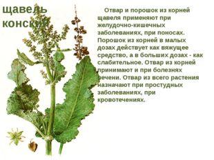 Отвар и порошок из корней щавеля применяют при желудочно-кишечных заболевани