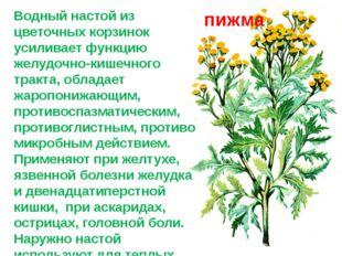 Водный настой из цветочных корзинок усиливает функцию желудочно-кишечного тра