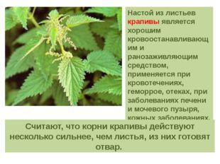 Настой из листьев крапивы является хорошим кровоостанавливающим и ранозаживля