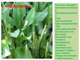 Растение обладает бактериостатическим противовоспалитель- ным, ранозаживляю-щ