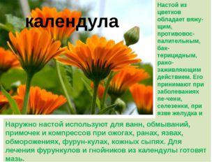 календула Настой из цветков обладает вяжу-щим, противовос-палительным, бак-те