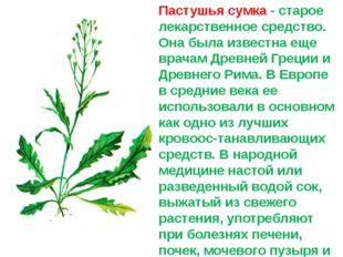 Пастушья сумка - старое лекарственное средство. Она была известна еще врачам