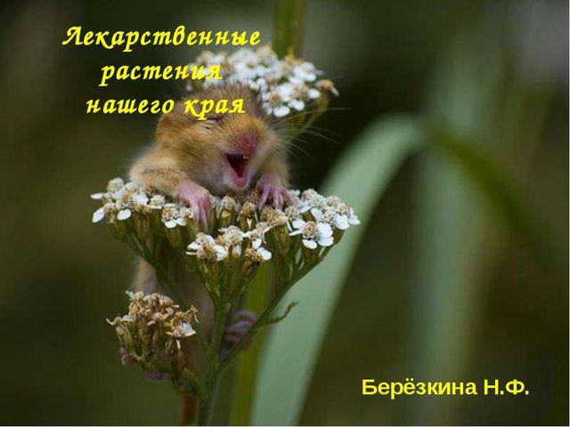 Лекарственные растения нашего края Берёзкина Н.Ф.