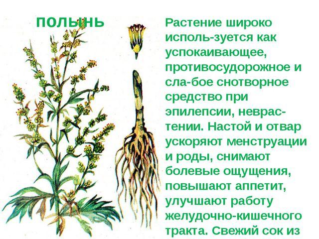 Растение широко исполь-зуется как успокаивающее, противосудорожное и сла-бое...