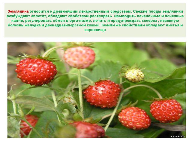 Земляника относится к древнейшим лекарственным средствам. Свежие плоды землян...