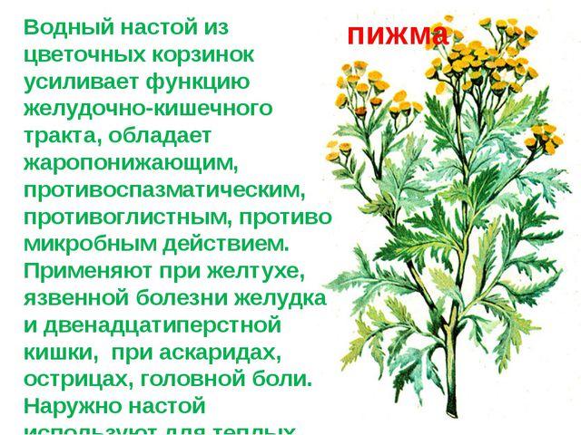 Водный настой из цветочных корзинок усиливает функцию желудочно-кишечного тра...
