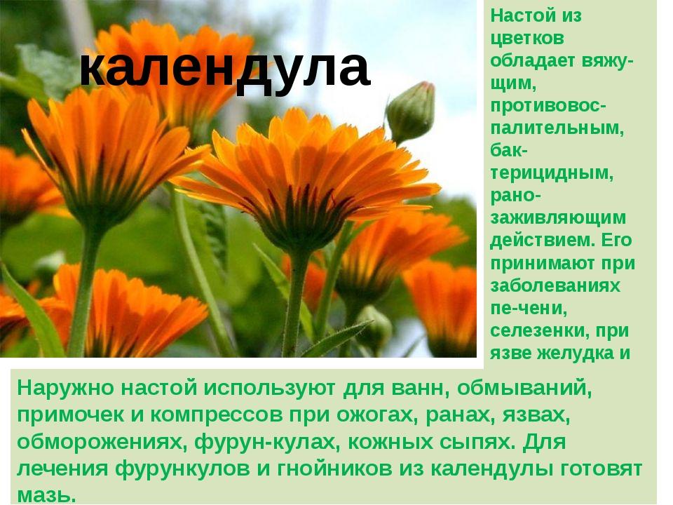 календула Настой из цветков обладает вяжу-щим, противовос-палительным, бак-те...
