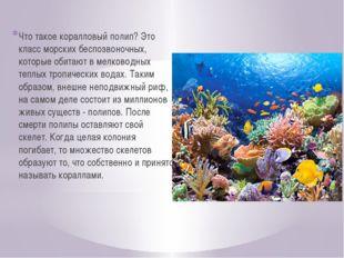 Что такое коралловый полип? Это класс морских беспозвоночных, которые обитают