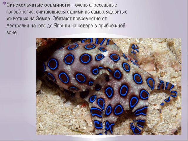 Синекольчатые осьминоги – очень агрессивные головоногие, считающиеся одними и...