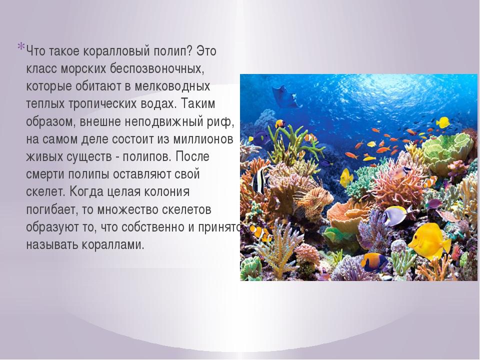 Что такое коралловый полип? Это класс морских беспозвоночных, которые обитают...
