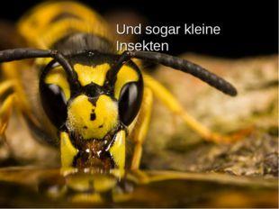 Und sogar kleine Insekten