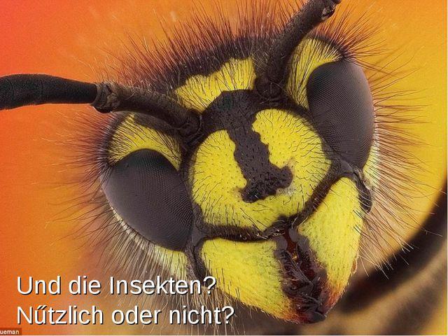 Und die Insekten? Nűtzlich oder nicht?