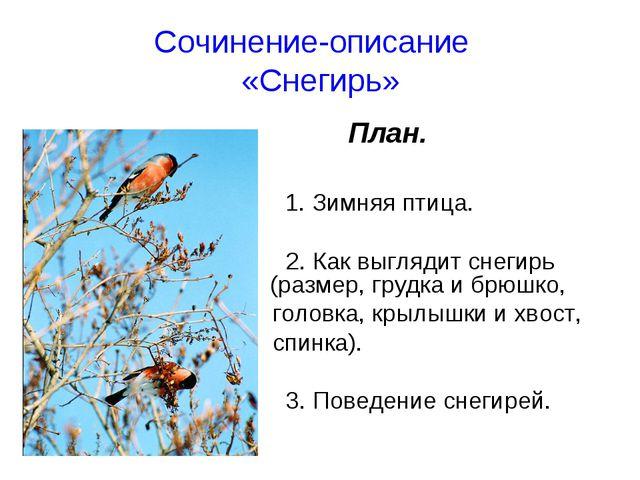 Сочинение-описание «Снегирь» План. 1. Зимняя птица. 2. Как выглядит снегирь...