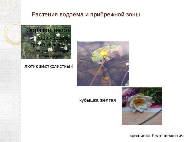 Растения водоёма и прибрежной зоны лютик жестколистный кубышка жёлтая кувшинк...
