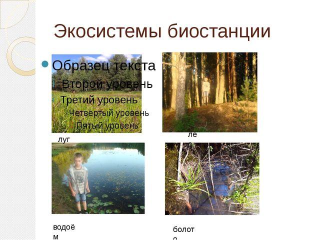 Экосистемы биостанции луг лес водоём болото