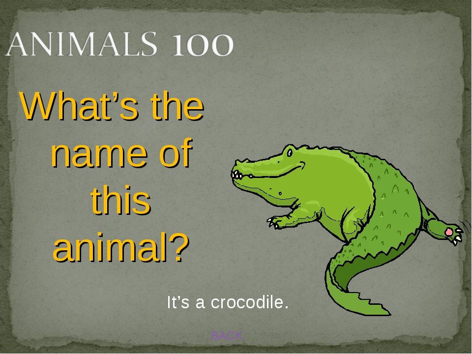 BACK What's the name of this animal? It's a crocodile.