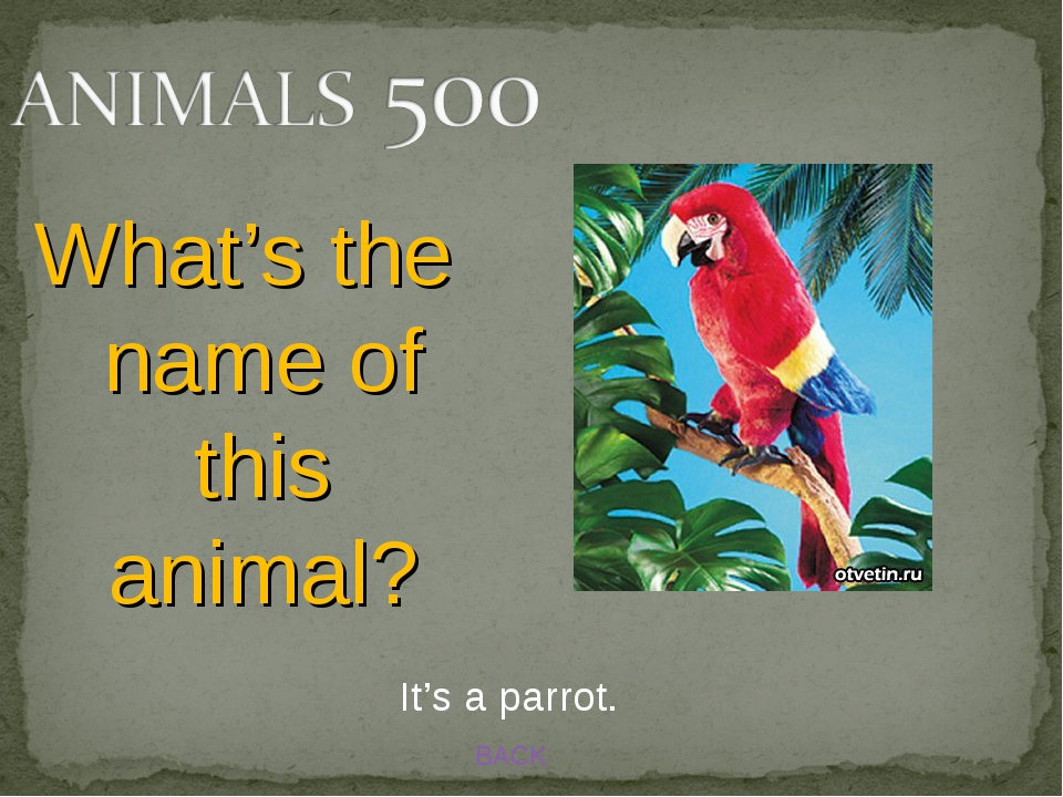 BACK It's a parrot. What's the name of this animal?