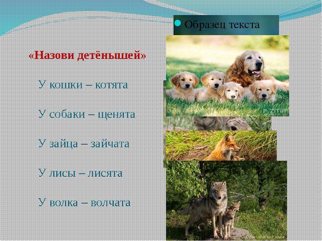 «Назови детёнышей» У кошки – котята У собаки – щенята У зайца – зайчата У ли...
