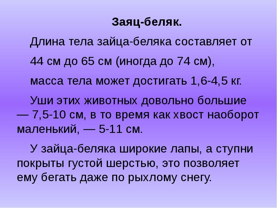 Заяц-беляк. Длина тела зайца-беляка составляет от 44 см до 65 см (иногда до...